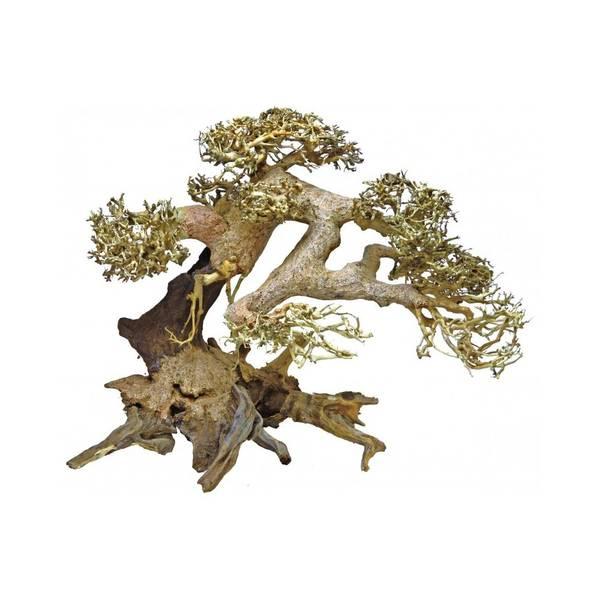 Bilde av  Bonsai Tree M (23 cm, diam. 30 cm)